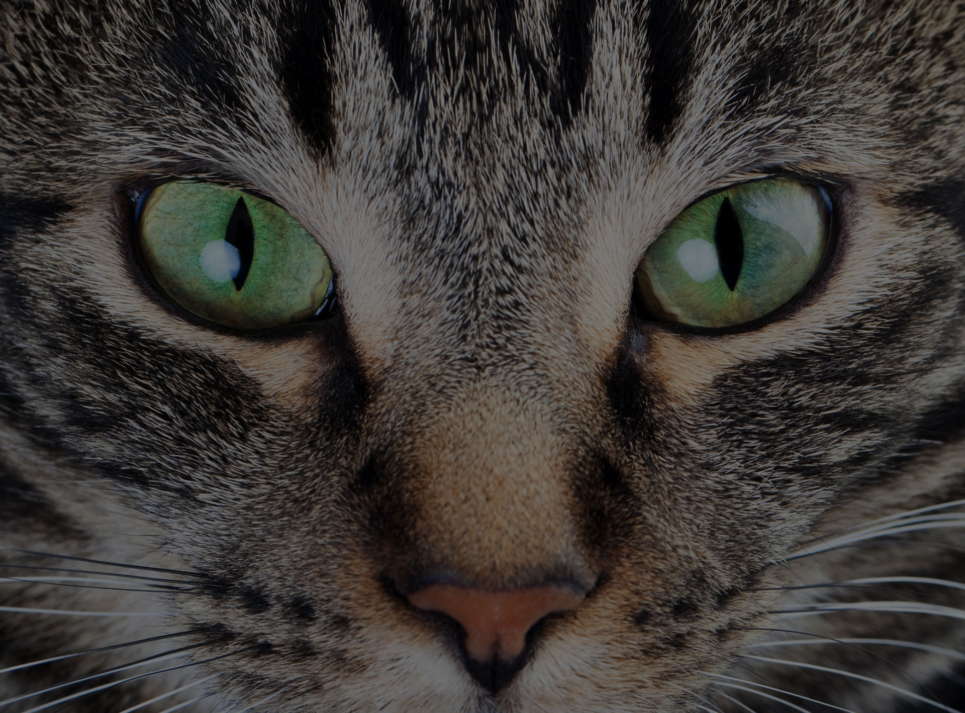 Cat With Green Eye close up